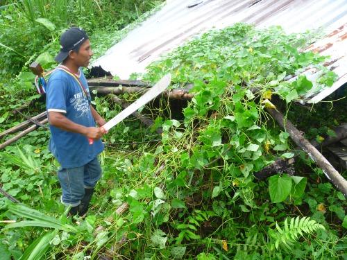 Resguardo Santa Rosa de Guayacán